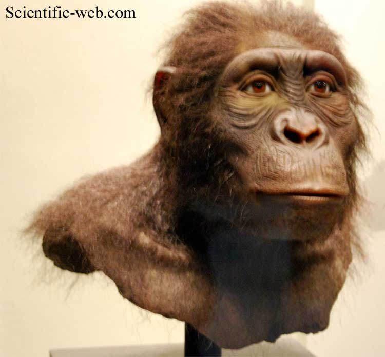 a study of the australopithecus Its scientific name is australopithecus a study of the tooth sockets of famous skull leads to reconsideration of but our study revealed that the.