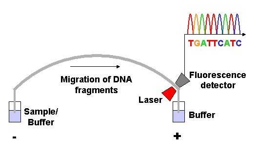DNA Sequencing 7 Methods Used for DNA Sequencing